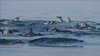 Tezpur-Dolphin-Cruise