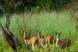 nepal-chitwa-national-park