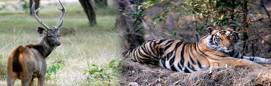 wildlifetour-banner
